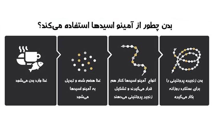 بدن چگونه از آمینو اسید استفاده می کند؟